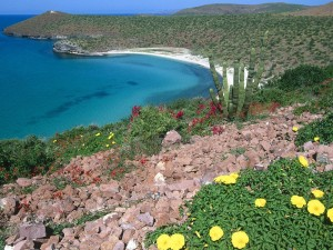 Postal: Playa en La Paz (Baja California, México)