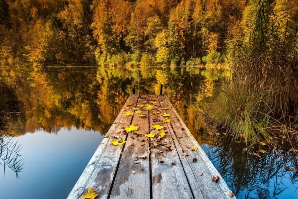 Hojas sobre el muelle en otoño