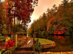 Postal: Puente de madera junto al río