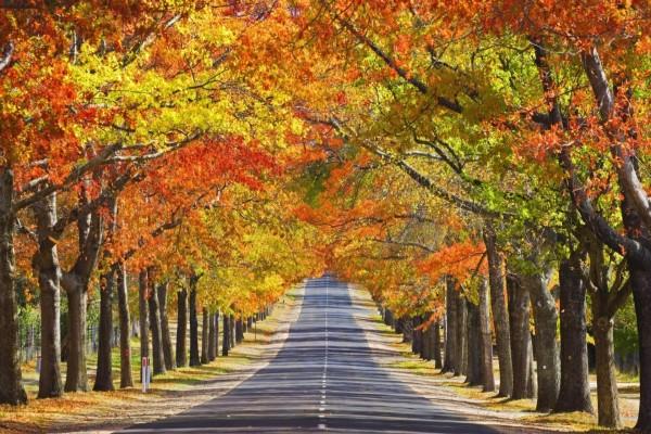 Árboles otoñales en hilera a orillas de una carretera