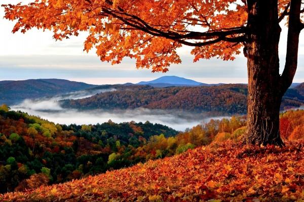 Arce en otoño