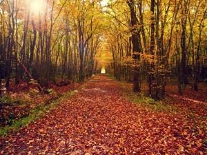 Postal: Camino en otoño cubierto de hojas