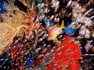 Pequeños peces tropicales