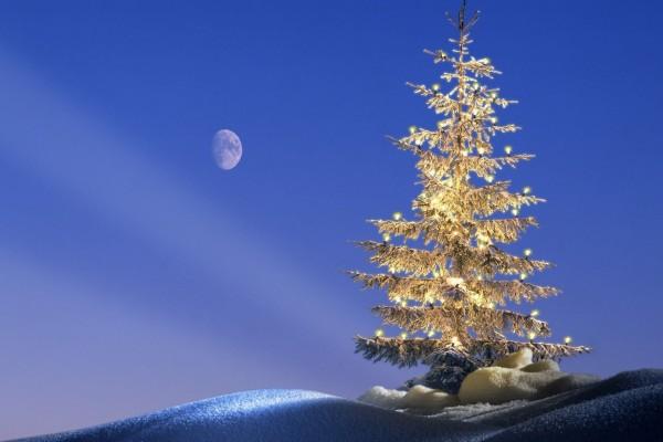 La luz de la Luna sobre el árbol de Navidad