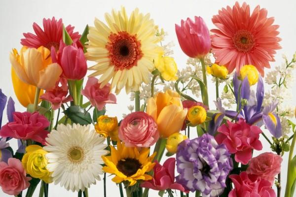 Bellas y coloridas flores primaverales