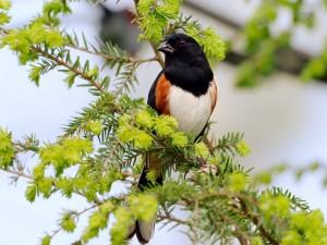 Un pájaro de cabeza negra