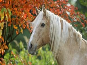 Un caballo junto a un árbol otoñal