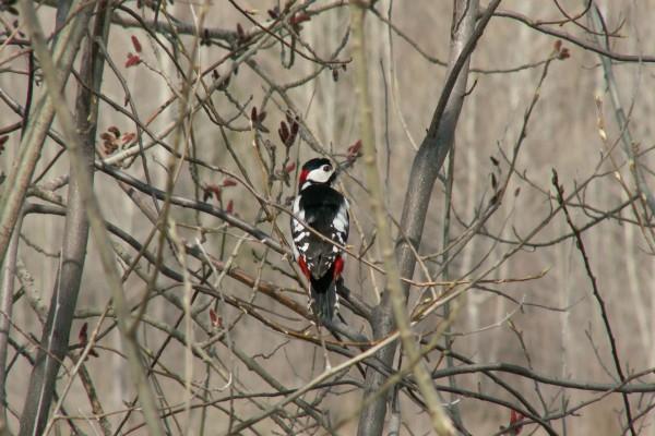 Un pájaro sobre un árbol sin hojas