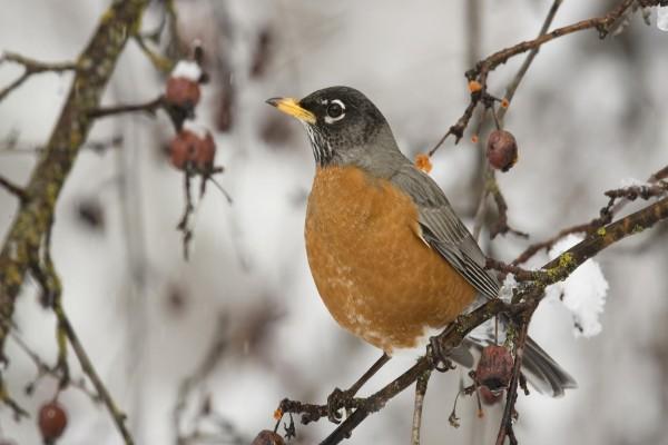 Pájaro sobre una rama en invierno