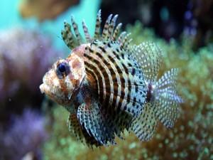 Postal: Un pez tropical en un acuario