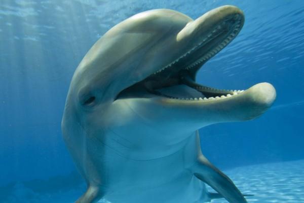 Un divertido delfín