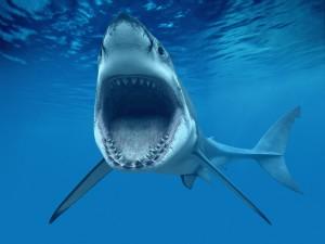 Postal: Tiburón con la boca abierta
