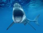 Tiburón con la boca abierta