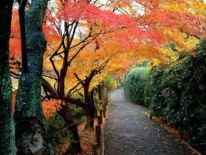 Postal: Espectaculares árboles otoñales junto a un camino