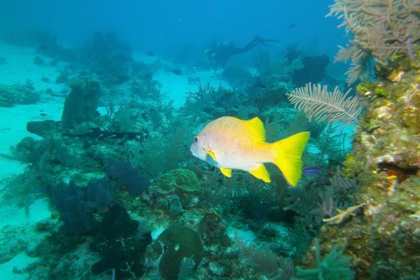 Buceo en el fondo marino