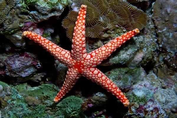 Una bonita estrella de mar en las rocas marinas