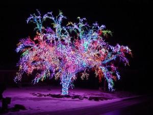 Postal: Árbol cubierto con luces de colores en una noche navideña
