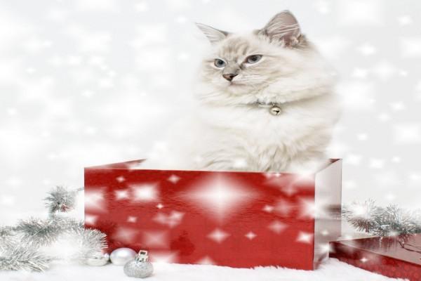 Un gato de regalo de Navidad