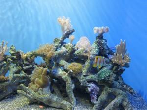 Bonito pez tropical en un acuario