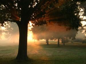 Postal: El sol de la mañana entre los árboles