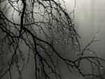 Gotas de lluvia en las ramas del árbol desnudo
