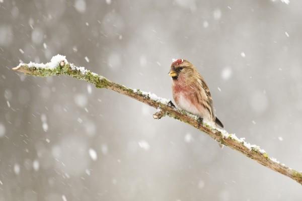 Pajarito bajo la nieve