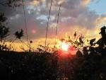 Puesta de sol vista entre las plantas