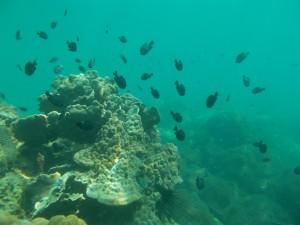 Peces negros nadando bajo el agua