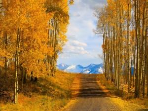 Carretera con árboles otoñales