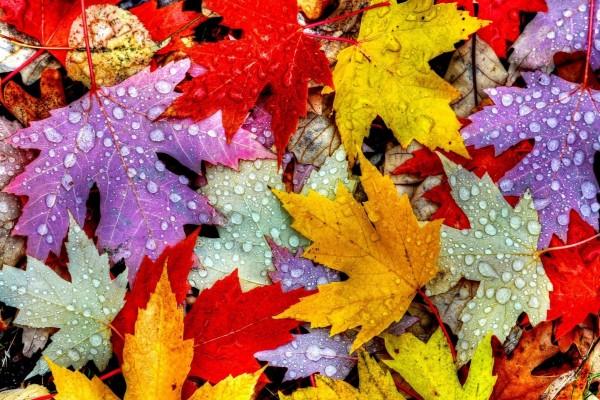 Hojas de colores en el suelo con gotas de agua