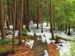 Camino de madera bajo la nieve