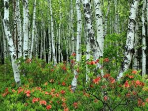 Abedules y flores