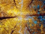 Bajo los árboles con hojas amarillas