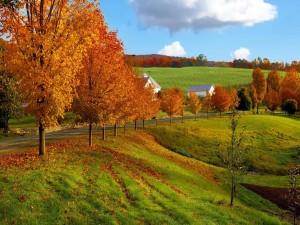Postal: Casas y árboles en otoño junto a una carretera