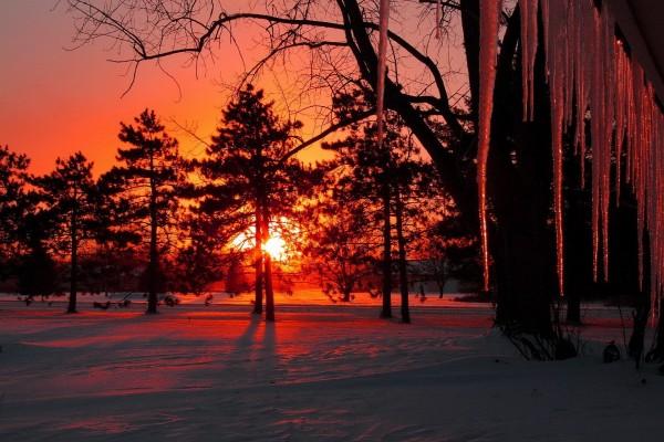 El sol detrás de los árboles tiñendo de naranja la nieve