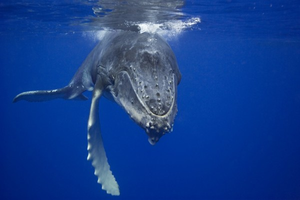 Frente a una ballena