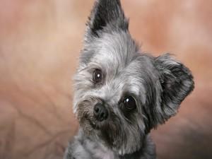 Postal: La cara tristona de un perrito