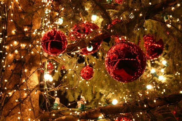 Bolas rojas y luces en un gran pino decorado para Navidad