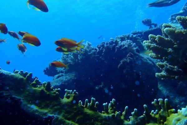 Peces naranjas en un gran acuario
