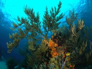 Plantas marinas cerca de la superficie
