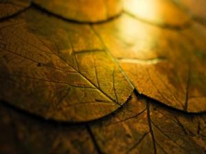 Postal: Baldosas con el dibujo de hojas otoñales