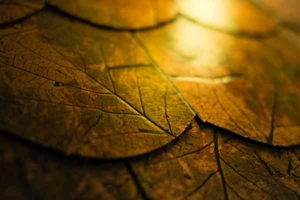 Baldosas con el dibujo de hojas otoñales