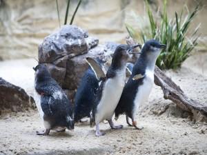 Pequeños pingüinos sobre la arena