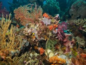 Rocas y plantas marinas