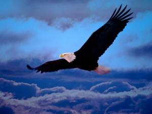 Un águila surcando el cielo
