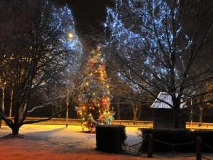 Árboles de Navidad en la calle