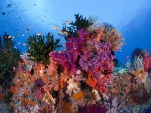 Pequeños peces en el arrecife de coral