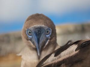 Simpática cara de un ave