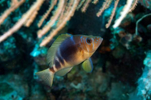 Un bonito pez marino