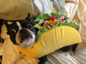 Postal: Un chistoso perro disfrazado de taco